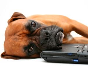 Σκύλος κουρασμένος δίπλα σε κομπιούτερ.
